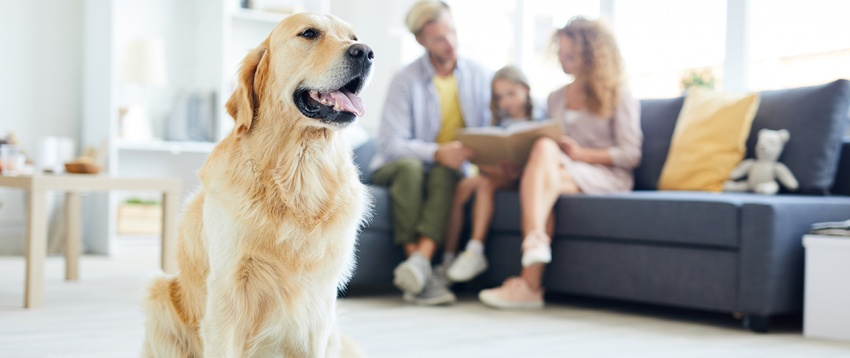pet-friendly-flooring-with-family-siting-in-the-background